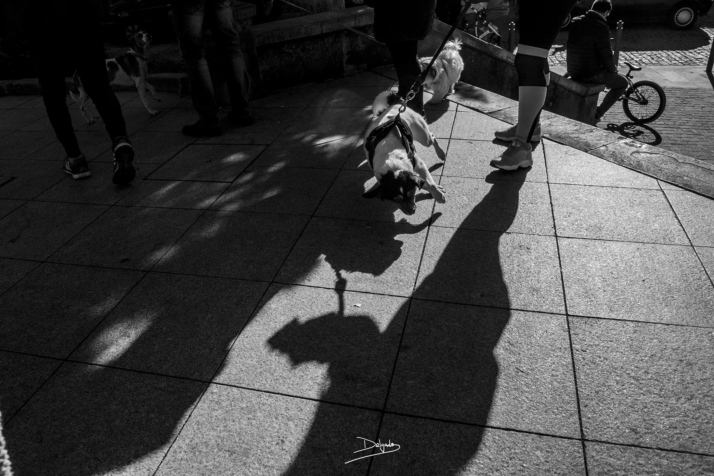 Foto del día: El peligro de las sombras.