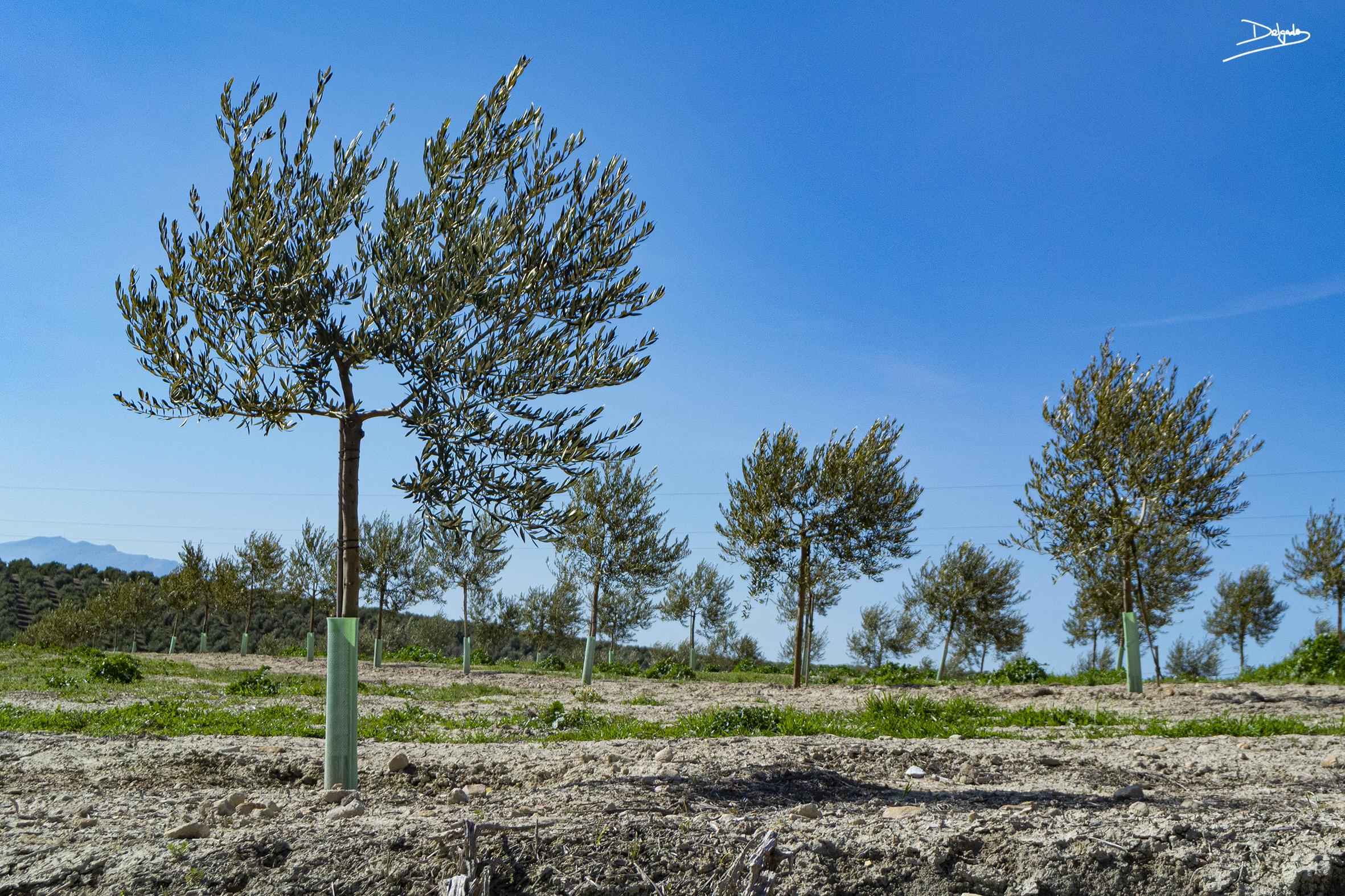Foto del día: Verde que te quiero verde, verde viento, verde ramas…