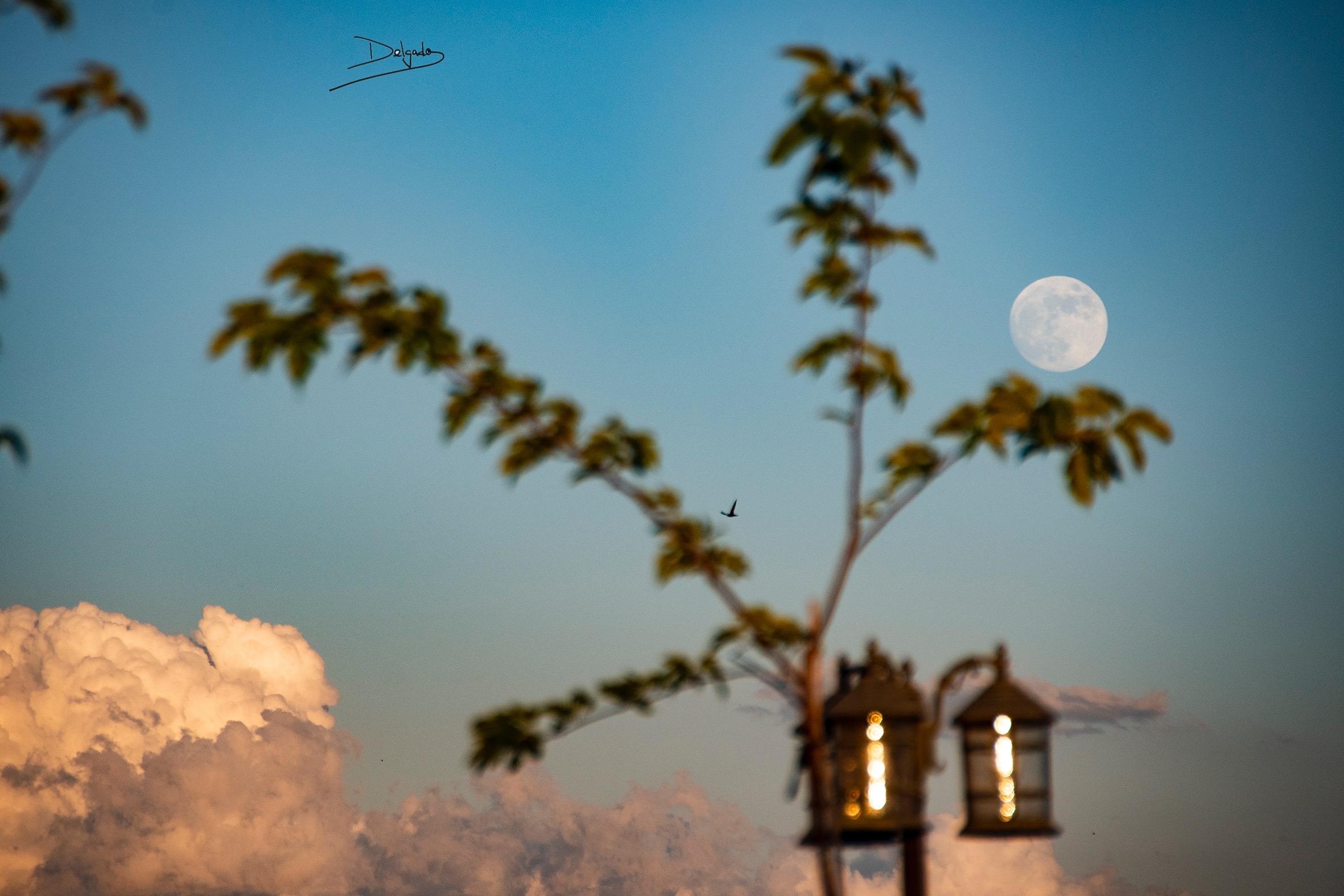 Foto del día: ¿Quién no ha soñado con la luna?